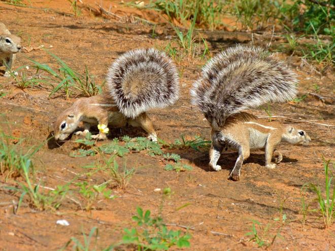 6 loài vật có khả năng thích nghi tuyệt vời nhất trong sa mạc khô cằn - Ảnh 8.