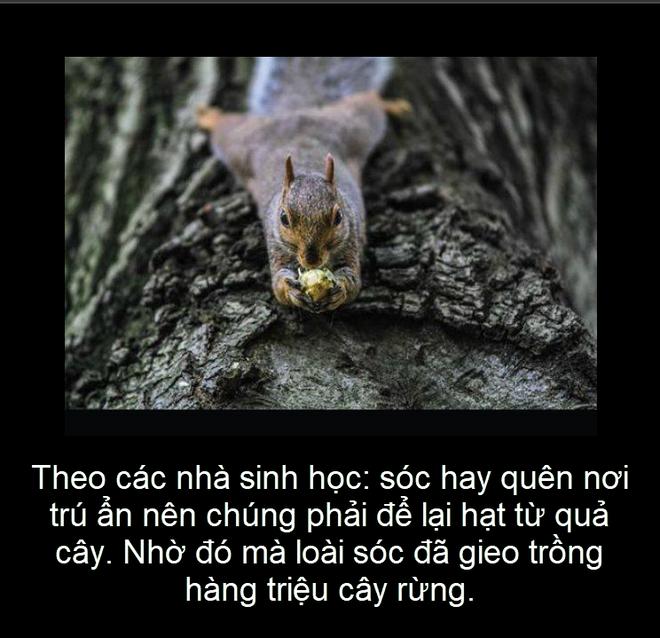 Sự thật thú vị: Loài vật nào lập công lớn trong việc gieo hàng triệu cây rừng? - Ảnh 3.