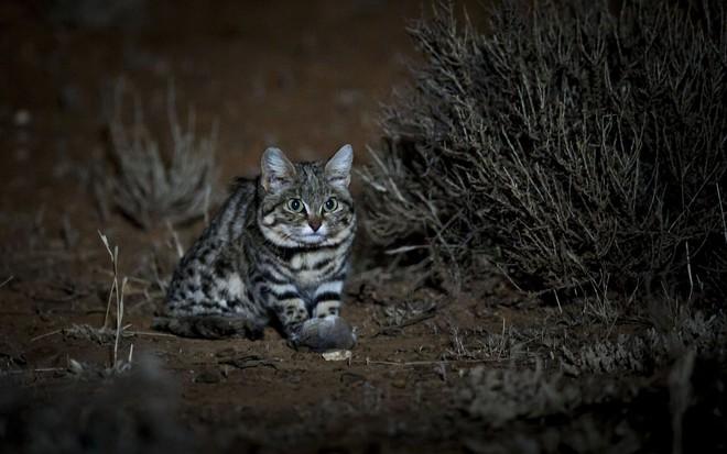 Gã thợ săn tàn ác của tự nhiên: Vượt xa loài báo, sẵn sàng bất động 2 tiếng để rình mồi - Ảnh 1.