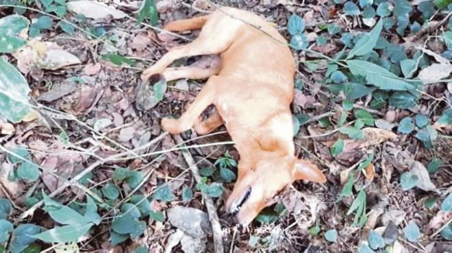 Chú chó hy sinh khi cứu cả gia đình nhà chủ khỏi trăn dài 6 m - Ảnh 2.