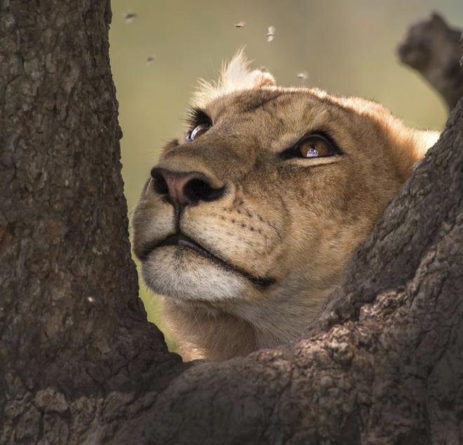 National Geographic tung những bức ảnh đẹp nhất 2018: Hơn 1 triệu bức ảnh khác bị loại! - Ảnh 19.