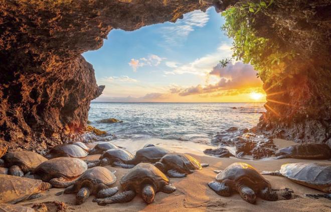 National Geographic tung những bức ảnh đẹp nhất 2018: Hơn 1 triệu bức ảnh khác bị loại! - Ảnh 14.