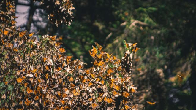 Hàng trăm nghìn con bướm như hình đã bốc hơi theo nghĩa đen chỉ trong vòng 1 năm qua và khoa học vẫn chưa hiểu tại sao - Ảnh 1.