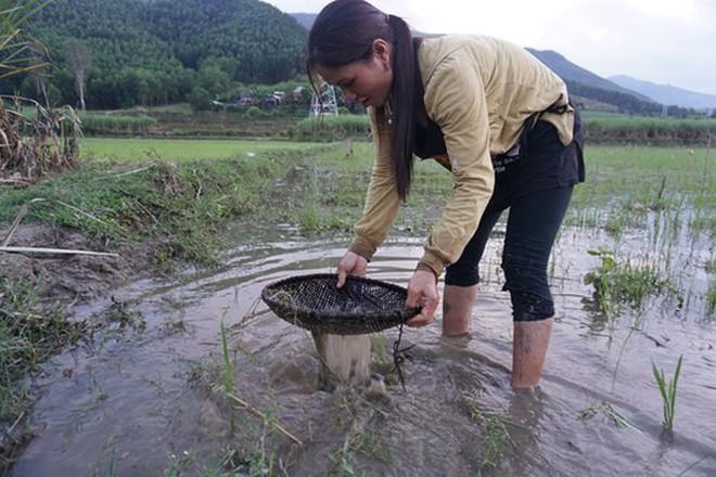 Mùa săn đặc sản nòng nọc ở vùng cao xứ Quảng - Ảnh 1.