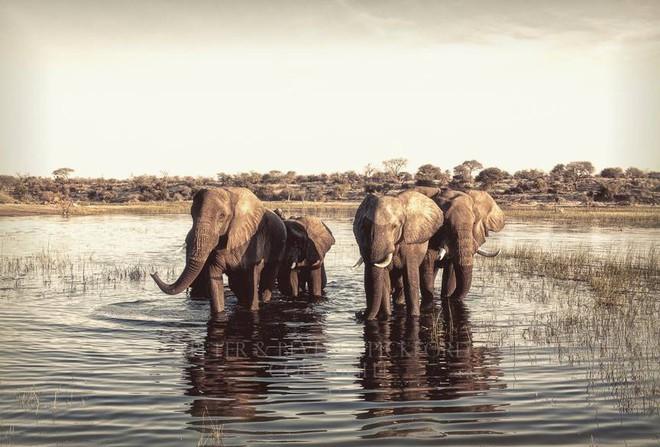 Những bức ảnh chứng minh rằng thiên nhiên hoang dã và toàn vẹn vẫn đang tồn tại trên Trái đất này - Ảnh 11.