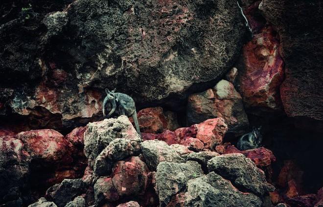 Những bức ảnh chứng minh rằng thiên nhiên hoang dã và toàn vẹn vẫn đang tồn tại trên Trái đất này - Ảnh 8.