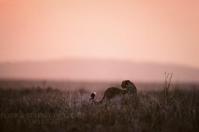 Những bức ảnh chứng minh rằng thiên nhiên hoang dã và toàn vẹn vẫn đang tồn tại trên Trái đất này - Ảnh 9.