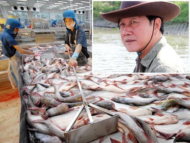 Vua cá Dương Ngọc Minh tìm lại danh tiếng đã mất - Ảnh 1.