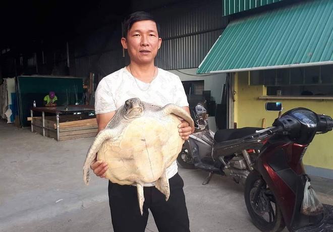 Bỏ tiền triệu mua rùa biển quý hiếm rồi thả về tự nhiên - Ảnh 2.