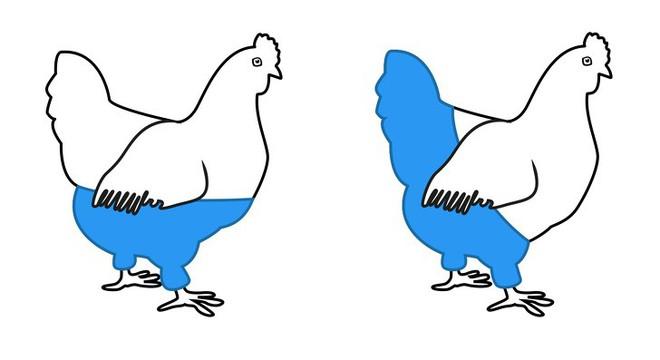 Một con gà mái sẽ mặc quần thế nào? Câu đố logic thách thức ngay cả người thông minh nhất - Ảnh 2.