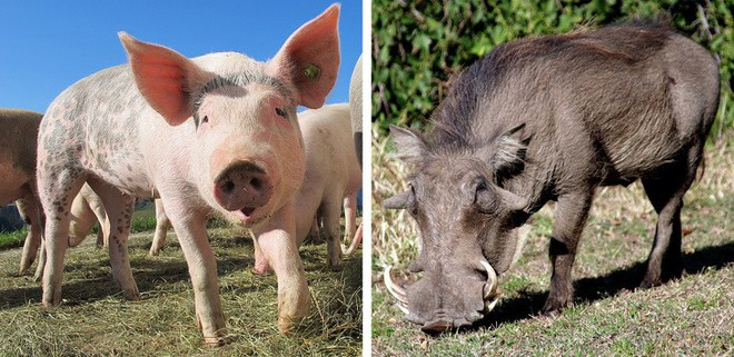 Chẳng ai ngờ được 9 loài vật cực quen thuộc này thời xưa lại có ngoại hình dị đến mức không thể tin nổi - Ảnh 1.