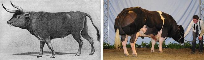 Chẳng ai ngờ được 9 loài vật cực quen thuộc này thời xưa lại có ngoại hình dị đến mức không thể tin nổi - Ảnh 2.