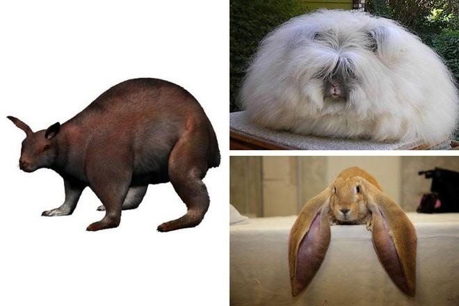 Chẳng ai ngờ được 9 loài vật cực quen thuộc này thời xưa lại có ngoại hình dị đến mức không thể tin nổi - Ảnh 6.