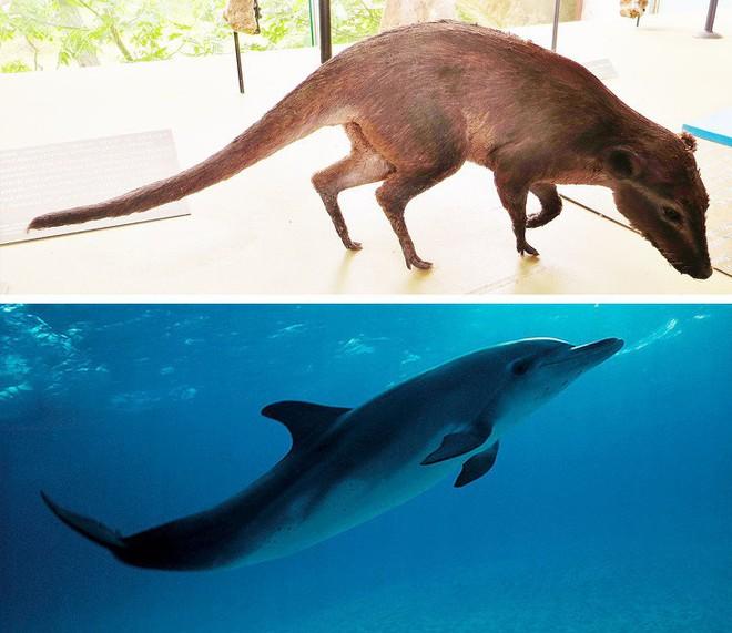 Chẳng ai ngờ được 9 loài vật cực quen thuộc này thời xưa lại có ngoại hình dị đến mức không thể tin nổi - Ảnh 7.