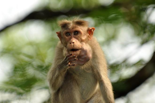 Những loài vật có miệng siêu rộng với khả năng đúng nghĩa là ăn cả thế giới mà không cần nhả ra - Ảnh 4.