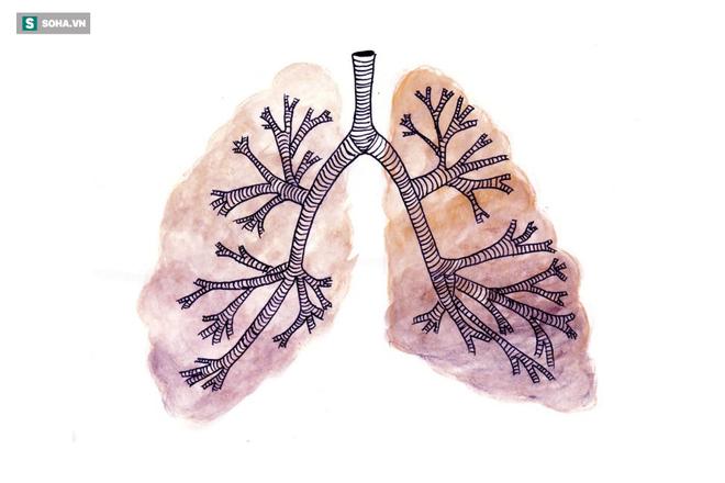 2 cách đơn giản của Đông y để chăm sóc phổi hiệu quả: Ai làm được phổi sẽ khỏe và ít bệnh - Ảnh 1.