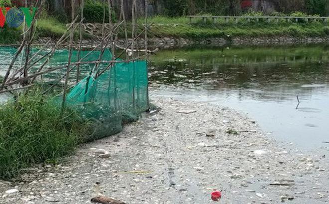 Hàng chục tấn cá chết trắng hồ Bàu Sen
