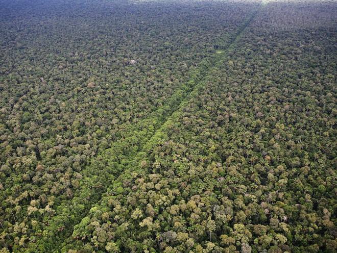 Hành trình đáng ngạc nhiên tiết lộ mặt trái ở rừng Amazon - Ảnh 4.