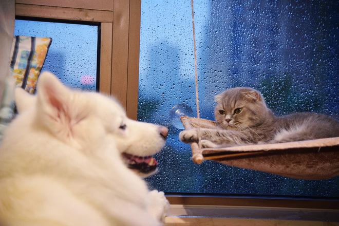 Phàn nàn nhóm bạn trẻ coi chó mèo hơn người sau 1 sự cố, bà mẹ trẻ khiến mạng xã hội dậy sóng - Ảnh 1.