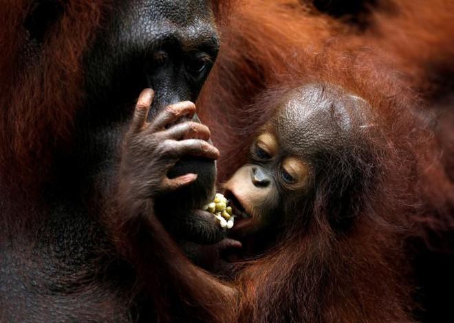 16 bức ảnh về động vật ấn tượng nhất năm 2018 - Ảnh 9.