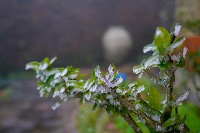 Đỉnh Mẫu Sơn xuống dưới 0 độ, xuất hiện băng giá - Ảnh 2.