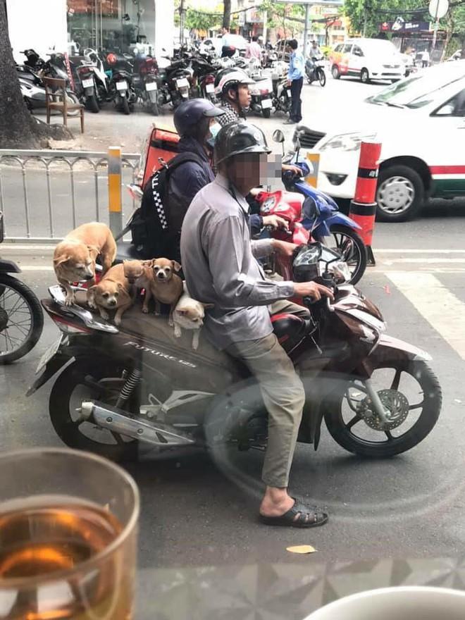 Chuyện những đàn chó khốn khổ: Đu bám trên yên xe, cùng chủ... drift qua mọi nẻo đường - Ảnh 2.