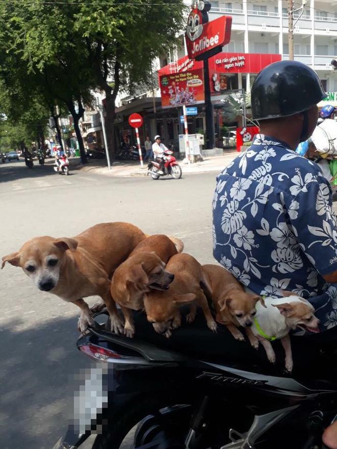 Chuyện những đàn chó khốn khổ: Đu bám trên yên xe, cùng chủ... drift qua mọi nẻo đường - Ảnh 4.