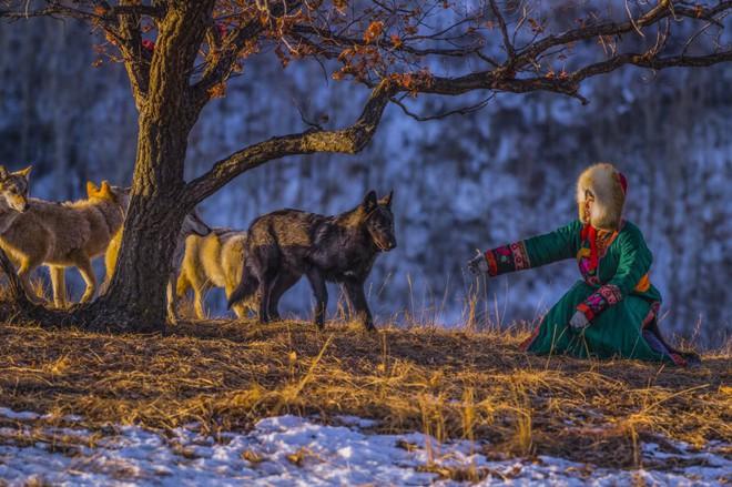 Cô gái Mông Cổ với dàn thú cưng độc 8 con sói, 3 bạn trai đều đòi chia tay vì sợ cãi nàng sẽ bị ăn thịt - Ảnh 3.