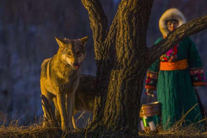 Cô gái Mông Cổ với dàn thú cưng độc 8 con sói, 3 bạn trai đều đòi chia tay vì sợ cãi nàng sẽ bị ăn thịt - Ảnh 7.