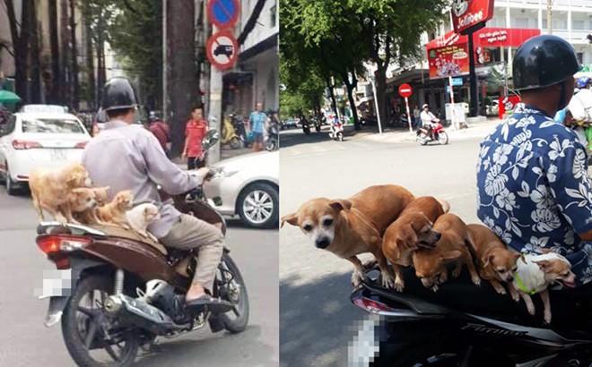 Chuyện những đàn chó khốn khổ: Đu bám trên yên xe, cùng chủ... drift qua mọi nẻo đường