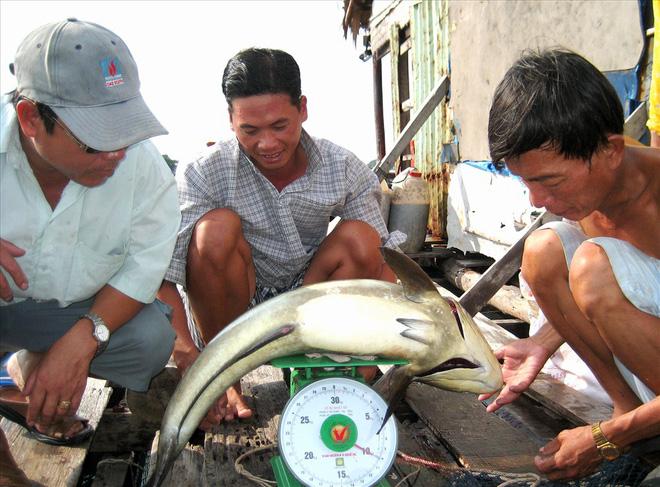 Nghề nuôi cá bạc tỷ ở Sơn Hải - Ảnh 11.
