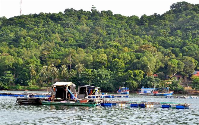 Nghề nuôi cá bạc tỷ ở Sơn Hải - Ảnh 4.
