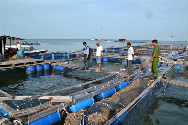 Nghề nuôi cá bạc tỷ ở Sơn Hải - Ảnh 5.