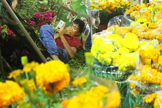 Sát tết hoa còn tồn nhiều, chủ vựa ở Sài Gòn treo biển than thở sao vào chụp hình hoài vậy - Ảnh 17.