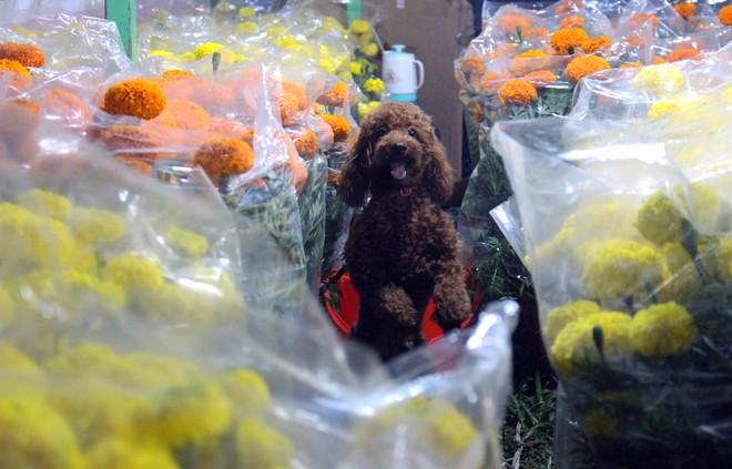 Sát tết hoa còn tồn nhiều, chủ vựa ở Sài Gòn treo biển than thở sao vào chụp hình hoài vậy - Ảnh 8.