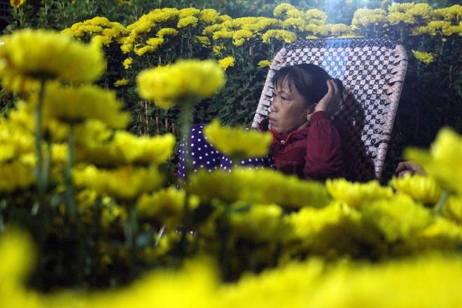 Sát tết hoa còn tồn nhiều, chủ vựa ở Sài Gòn treo biển than thở sao vào chụp hình hoài vậy - Ảnh 6.