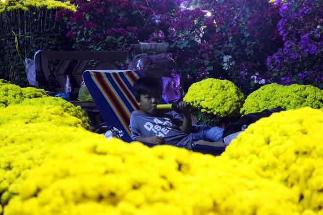 Sát tết hoa còn tồn nhiều, chủ vựa ở Sài Gòn treo biển than thở sao vào chụp hình hoài vậy - Ảnh 7.