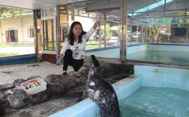 Kỳ công nuôi chó biển ở Nha Trang