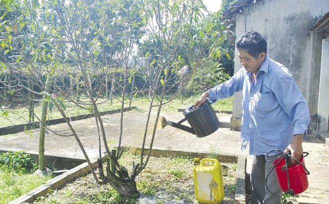 Người trồng được đào Nhật Tân duy nhất ở Bình Định