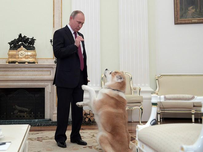 Tiết lộ bí mật thú vị về những chú chó của Tổng thống Nga Putin - Ảnh 4.