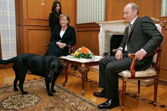 Tiết lộ bí mật thú vị về những chú chó của Tổng thống Nga Putin - Ảnh 5.