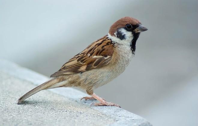 Nổi cáu vì bố hỏi mãi về con chim sẻ, đến khi đọc cuốn nhật ký, con trai cúi đầu xấu hổ - Ảnh 1.