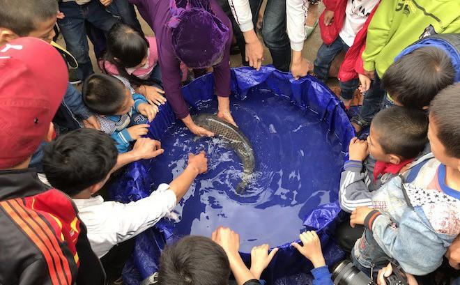Đã bắt con cá nổi ở kênh mà người dân ùn ùn kéo đến xem mấy ngày Tết