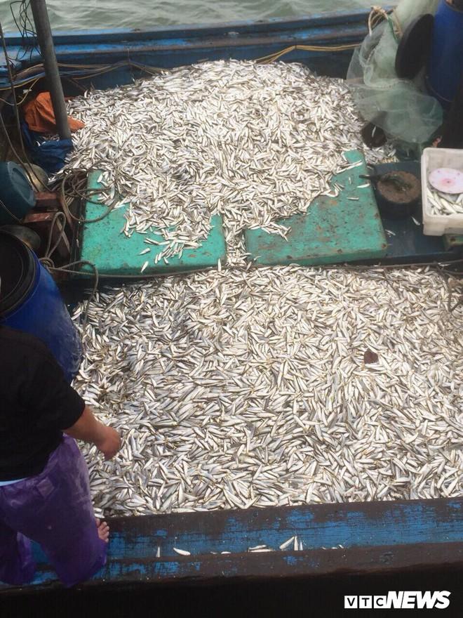 Ngư dân Quảng Trị trúng lộc biển đầu năm, kiếm tiền triệu mỗi ngày - Ảnh 1.