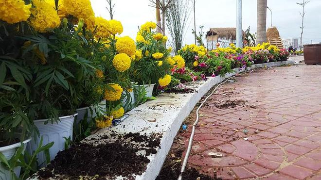 Hơn 10 người ùa vào đập phá hàng trăm chậu hoa rồi lấy chậu, dùng đá tấn công bảo vệ - Ảnh 1.