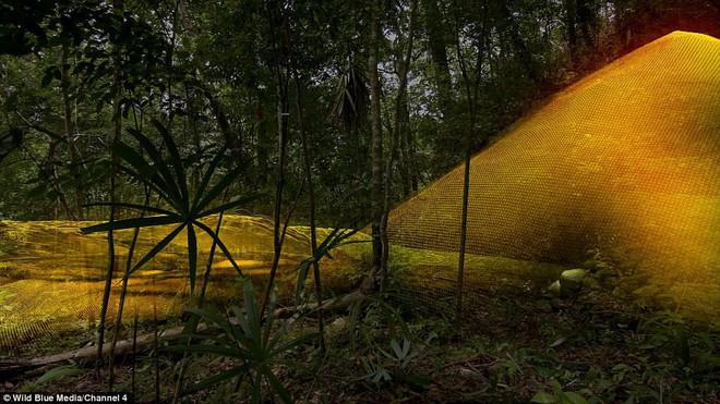 Phát hiện 60.000 kiến trúc bí ẩn của người Maya sâu trong rừng rậm ở Guatemala - Ảnh 4.