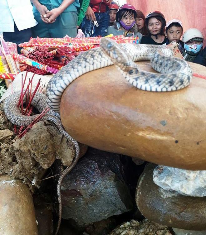 Hai con rắn xuất hiện trên ngôi mộ vô danh, hàng nghìn dân tập trung cúng bái - Ảnh 1.