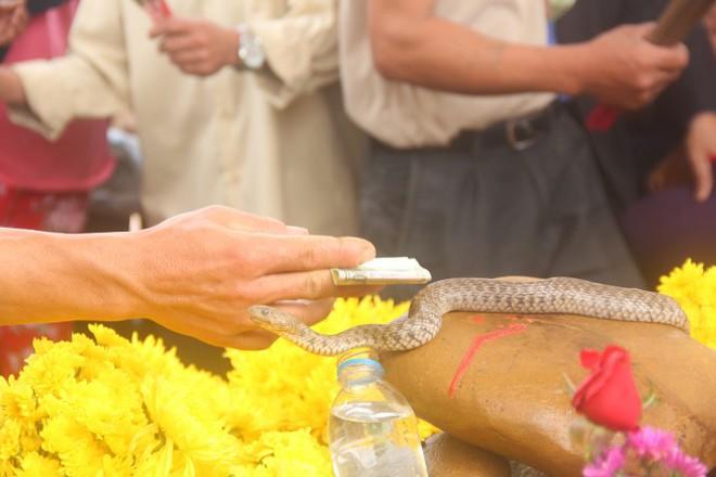 Số tiền người dân cúng cặp rắn thần tại ngôi mộ vô danh đã lên tới hàng trăm triệu - Ảnh 2.