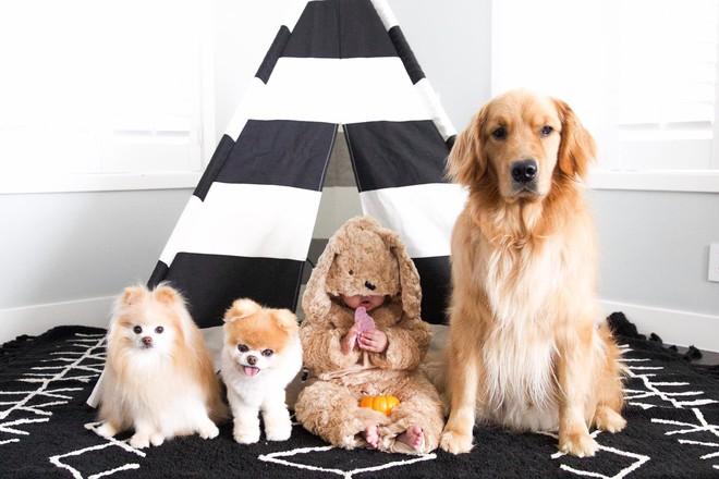 Chú mèo 'Chó' ở Hải Phòng nổi tiếng cũng chưa bằng con chó có 16 triệu theo dõi này - Ảnh 6.