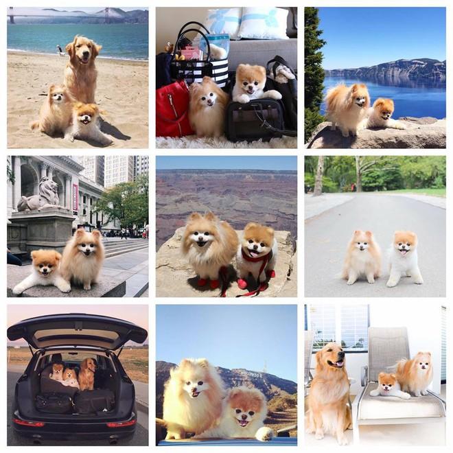 Chú mèo 'Chó' ở Hải Phòng nổi tiếng cũng chưa bằng con chó có 16 triệu theo dõi này - Ảnh 7.